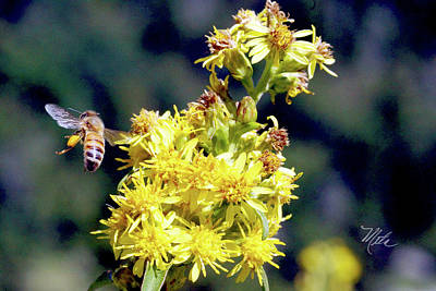 Print featuring the photograph Bee On Goldenrod by Meta Gatschenberger