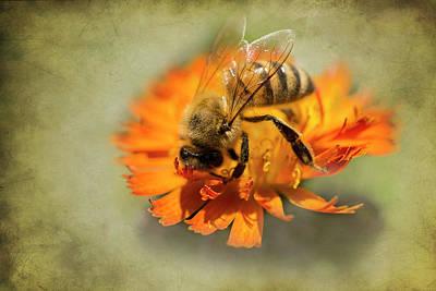 Photograph - Bee On Orange by Inge Riis McDonald