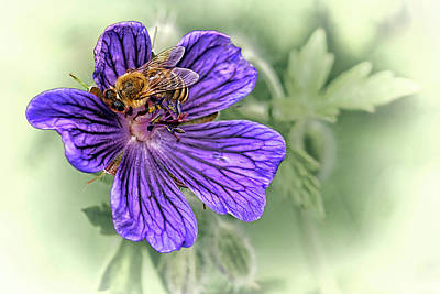 Flower Photograph - Bee On Perennial Geranium by Marcia Colelli