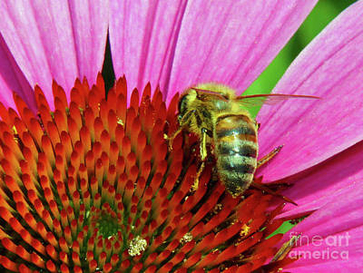 Photograph - Bee On Pink Flower by Inspirational Photo Creations Audrey Woods