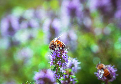 Photograph - Bee On Purple Flower by Lilia D