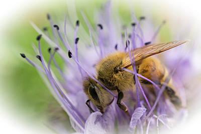 Photograph - Bee On Purple by Inge Riis McDonald