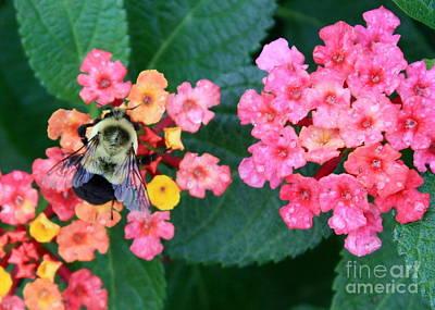Bee On Rainy Flowers Print by Carol Groenen