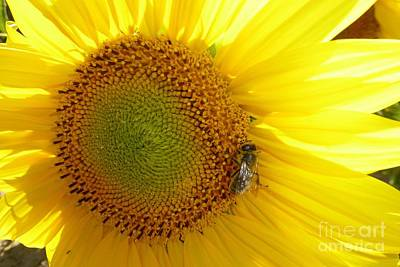 Print featuring the photograph Bee On Sunflower by Jean Bernard Roussilhe