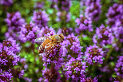 Photograph - Bee On The Purple Flower 5 by Lilia D