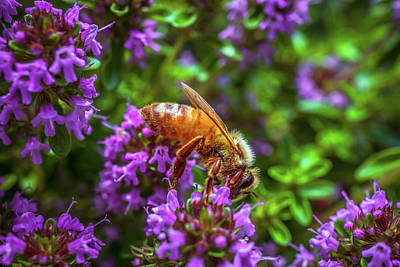 Photograph - Bee On The Purple Flower4 by Lilia D