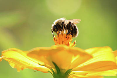 Photograph - Bee On Top 2 by Brian Hale