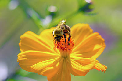 Photograph - Bee On Top by Brian Hale