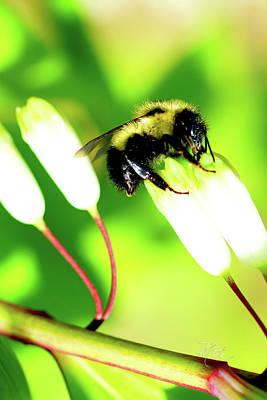 Photograph - Bee On Solomons Seal Flower by Meta Gatschenberger
