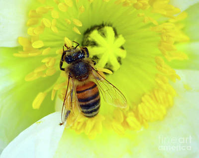 Photograph - Bee On Yellow by Inspirational Photo Creations Audrey Woods