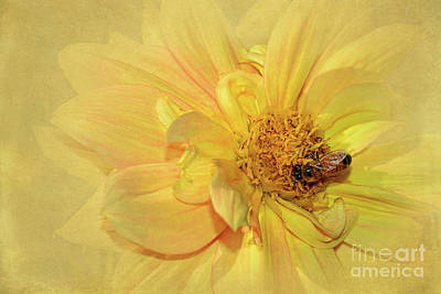 Photograph - Bee On Yellow Dahlia By Kaye Menner by Kaye Menner