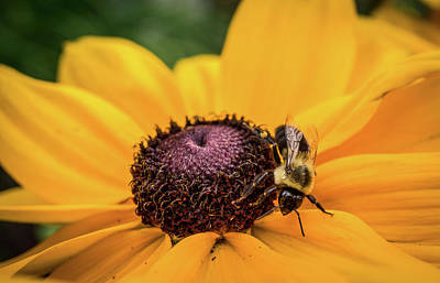 Photograph - Bee On Yellow Flower by Lilia D