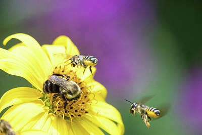 Photograph - Bee Party by Brian Hale