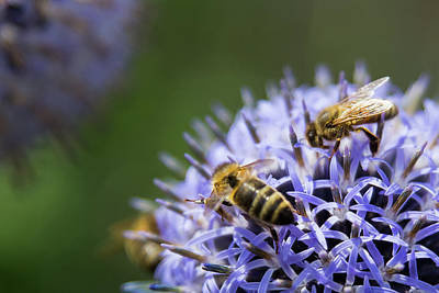 Photograph - Bee Party by Lora Lee Chapman