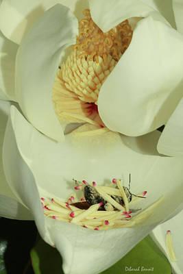 Bee Pollen Overdose Art Print by Deborah Benoit