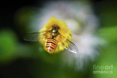Bee Pollinating A Flower. Art Print