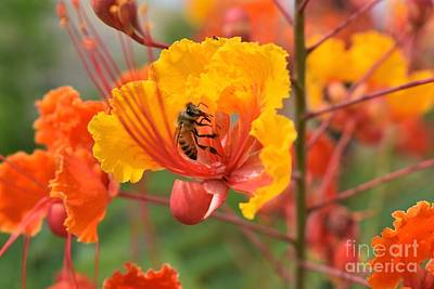 Bee Pollinating Bird Of Paradise Art Print