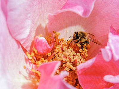 Photograph - Bee Red.... by Paul Vitko