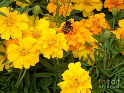 Photograph - bee by Robert D McBain