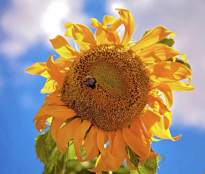 Photograph - Bee Shaded By Sunflower by Toni Hopper