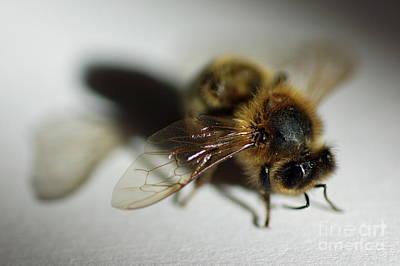 Bee Sitting On A White Sheet Art Print by Sami Sarkis