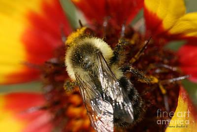 Bee Six - Art Print by Silvana Siudut