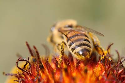 Bee Three Art Print by Silvana Siudut