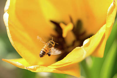 Photograph - Bee Universe by Brian Hale