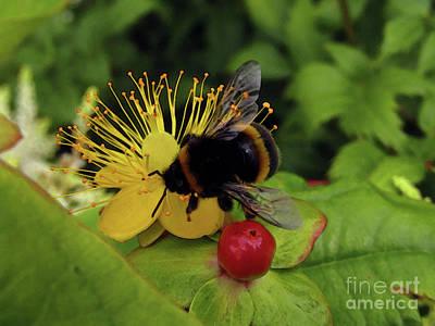 Photograph - Bee-utiful Day by Kim Tran
