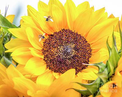 Photograph - Bee-utiful by Joann Long