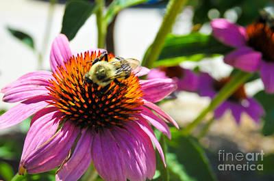 Bee-utiful Art Print by Maureen Norcross