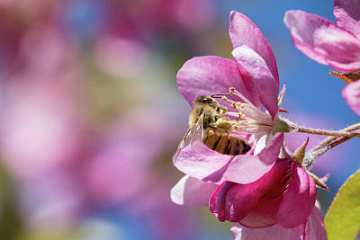 Photograph - Bee-utiful by Penny Meyers