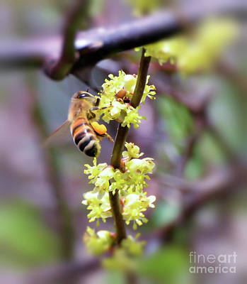 Photograph - Bee With Heart Shaped Pollen by Kerri Farley