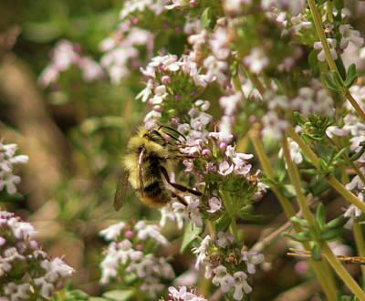 Photograph - Bee Bop by Marilyn Wilson