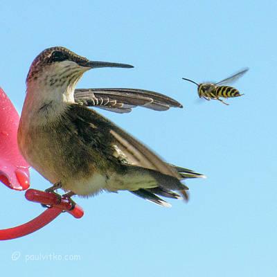 Photograph - Bee_bird by Paul Vitko