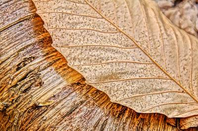 Photograph - Beech And Birch by Julie Grandfield