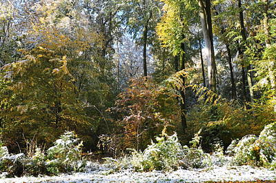 Photograph - Beech And Oak Forest Autumn Leaves And Snow by Martin Stankewitz