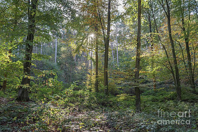 Photograph - Beech And Sweet Chestnut Woodland In Autumn by Perry Rodriguez