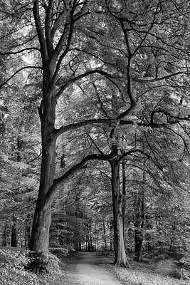 Beech Forest - 365-222 Art Print by Inge Riis McDonald