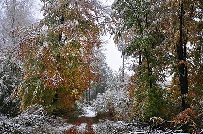 Photograph - Beech Forest In Autumn Leaves Covered With Early Snow  by Martin Stankewitz