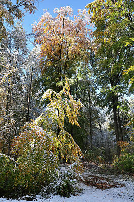 Photograph - Beech Forst In Autumn Leaves Covered With Early Snow by Martin Stankewitz