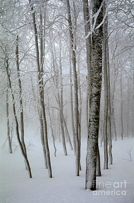 Trees In Snow Photograph - Beech Grove In Snow by Italian School