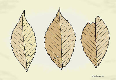 Beech Leaf Illustration Art Print by Jamie Jorgensen