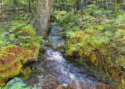 Photograph - Beech Mountain Encounter by John M Bailey