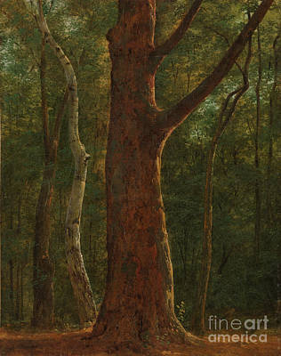 Beech Tree Art Print by Celestial Images