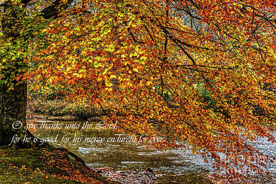 Beech Tree And Holly River In Autumn Art Print