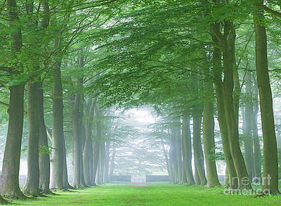 Photograph - Beech Tree Avenue by Rod Jellison