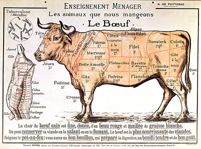 Cow Wall Art - Drawing - Beef by French School