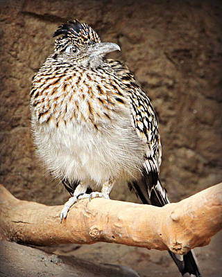 Photograph - Beep-beep Road Runner by Kathy M Krause