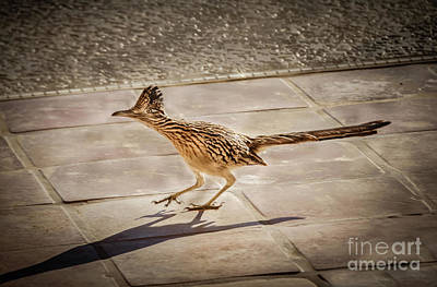 Roadrunner Wall Art - Photograph - Beep Beep by Robert Bales